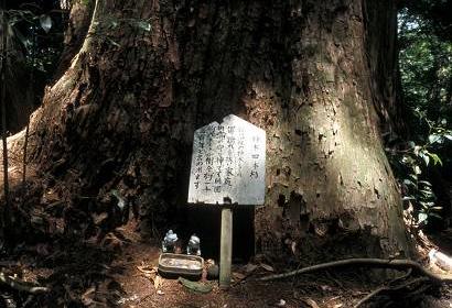 kodama_tree
